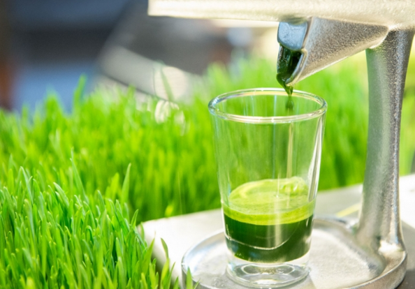 Best Wheatgrass Juicers